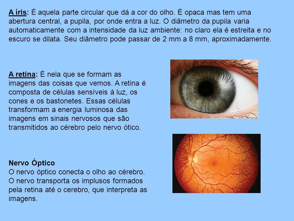 A íris: É aquela parte circular que dá a cor do olho. É opaca mas tem uma abertura central, a pupila, por onde entra a luz. O diâmetro da pupila varia