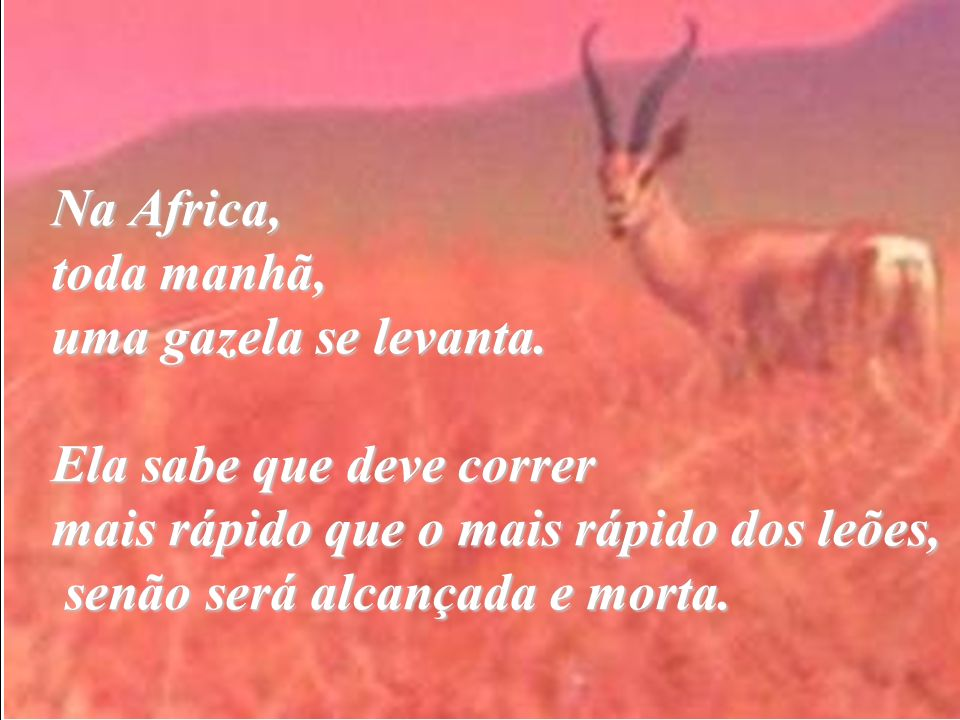 Na Africa, toda manhã, uma gazela se levanta. Ela sabe que deve correr mais rápido que o mais rápido dos leões, senão será alcançada e morta.