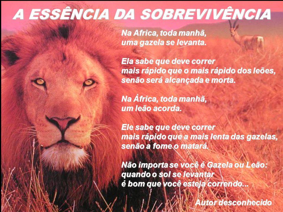 Na Africa, toda manhã, uma gazela se levanta. Ela sabe que deve correr mais rápido que o mais rápido dos leões, senão será alcançada e morta. Na Áfric