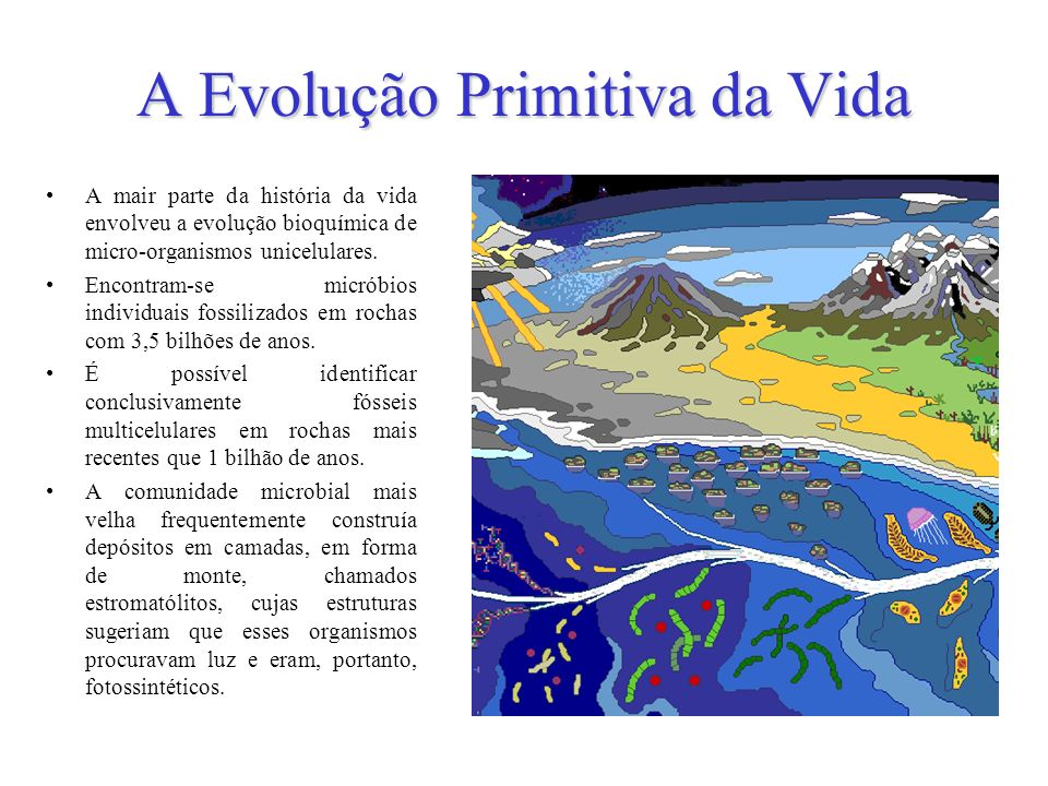 Estes estromatólitos primordiais cresciam ao longo de antigas costas oceânicas e resistiram à severa radiação solar assim como às constantes secagens e umedecimentos pelas marés.