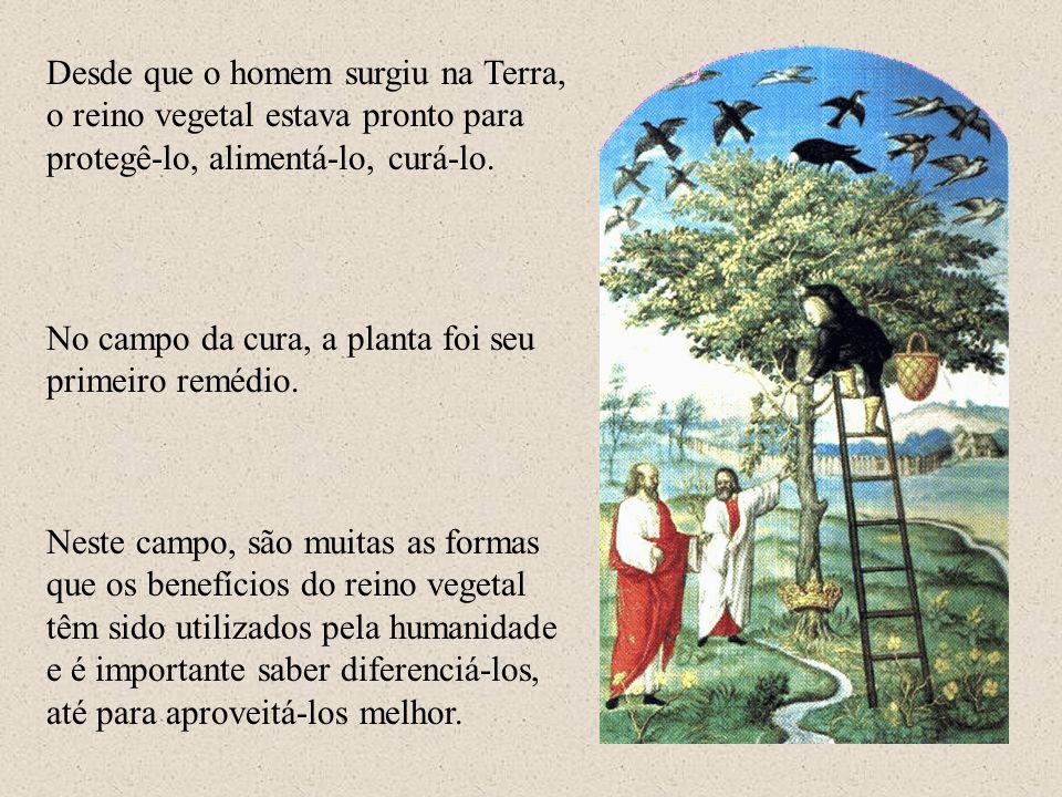 Desde que o homem surgiu na Terra, o reino vegetal estava pronto para protegê-lo, alimentá-lo, curá-lo. No campo da cura, a planta foi seu primeiro re