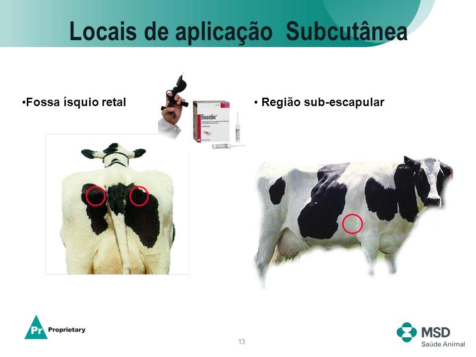 13 Locais de aplicação Subcutânea Região sub-escapularFossa ísquio retal