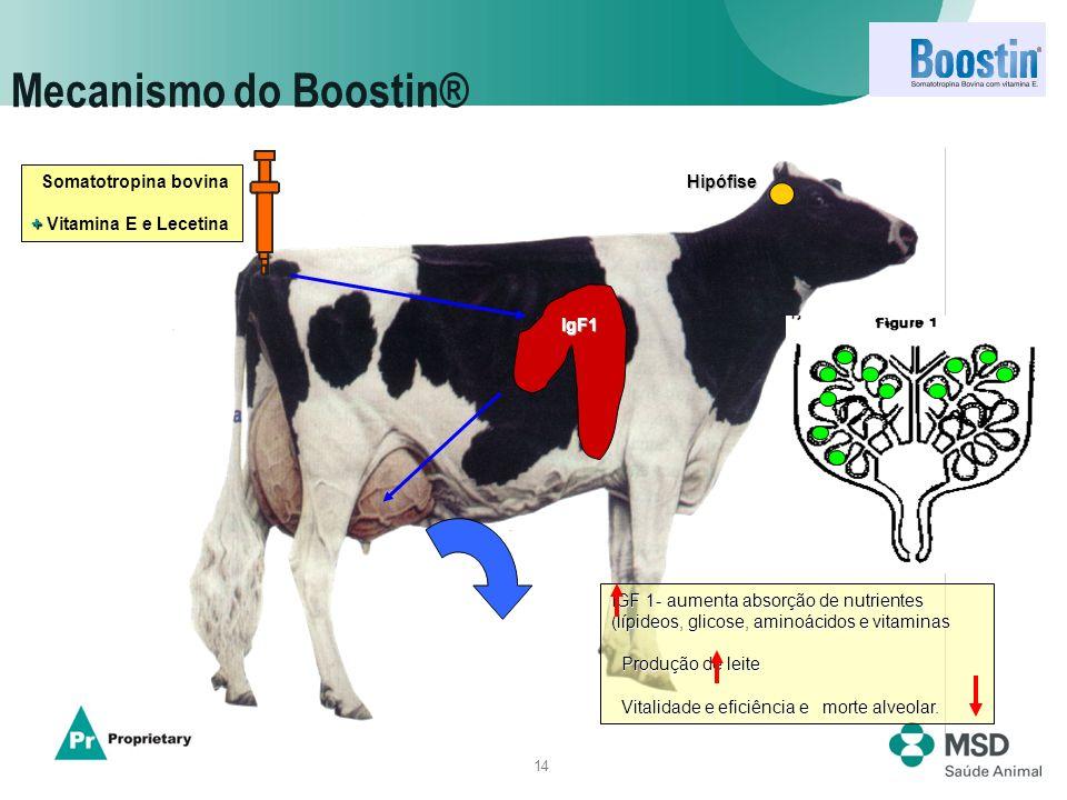 14 Mecanismo do Boostin® IGF 1- aumenta absorção de nutrientes (lípideos, glicose, aminoácidos e vitaminas Produção de leite Produção de leite Vitalid