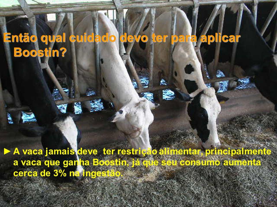 24 Então qual cuidado devo ter para aplicar Boostin? A vaca jamais deve ter restrição alimentar, principalmente a vaca que ganha Boostin, já que seu c