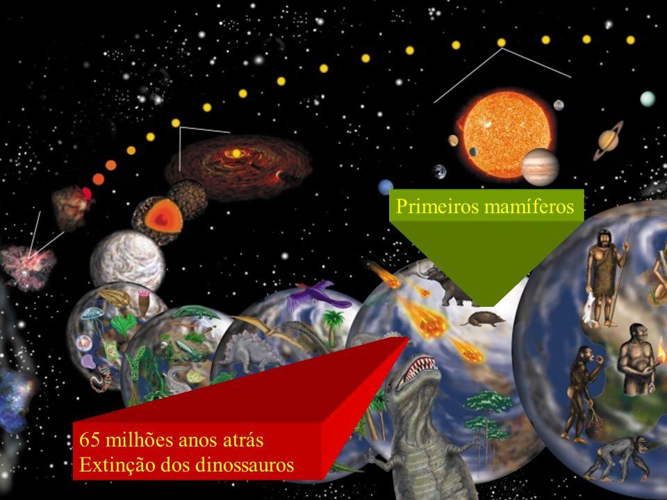 65 milhões anos atrás Extinção dos dinossauros Primeiros mamíferos