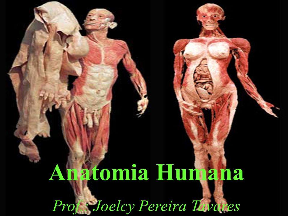 Anatomia Humana Prof.: Joelcy Pereira Tavares
