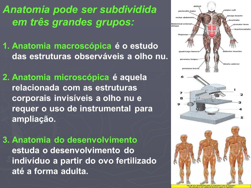 Moderno Anatomía Macroscópica Y Microscópica Fotos - Imágenes de ...