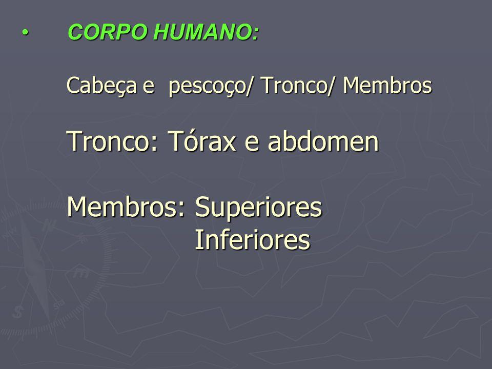 CORPO HUMANO: Cabeça e pescoço/ Tronco/ Membros Tronco: Tórax e abdomen Membros: Superiores InferioresCORPO HUMANO: Cabeça e pescoço/ Tronco/ Membros