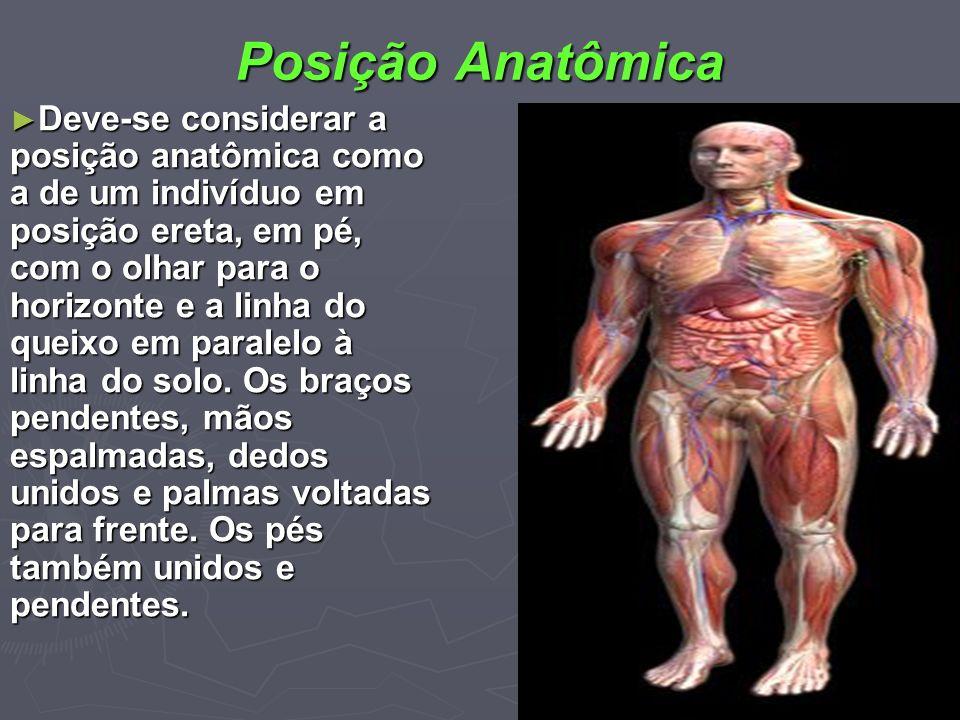 Posição Anatômica Deve-se considerar a posição anatômica como a de um indivíduo em posição ereta, em pé, com o olhar para o horizonte e a linha do que
