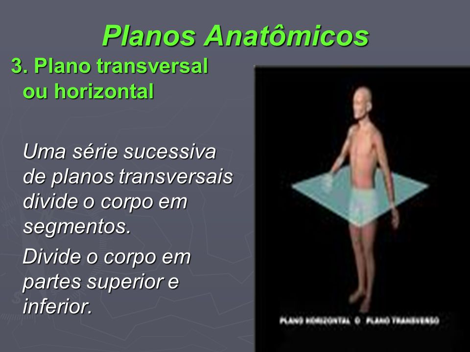 Planos Anatômicos 3. Plano transversal ou horizontal 3. Plano transversal ou horizontal Uma série sucessiva de planos transversais divide o corpo em s