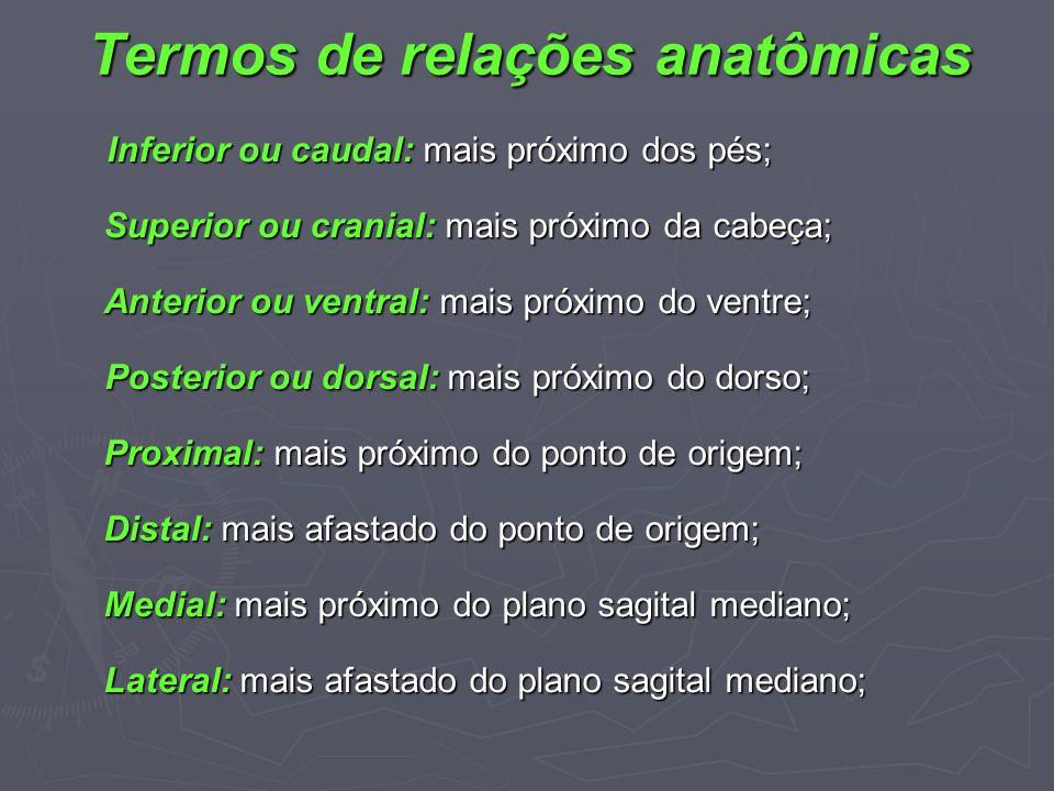 Termos de relações anatômicas Inferior ou caudal: mais próximo dos pés; Inferior ou caudal: mais próximo dos pés; Superior ou cranial: mais próximo da
