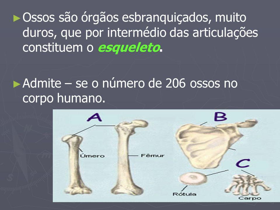 Ossos são órgãos esbranquiçados, muito duros, que por intermédio das articulações constituem o esqueleto. Admite – se o número de 206 ossos no corpo h