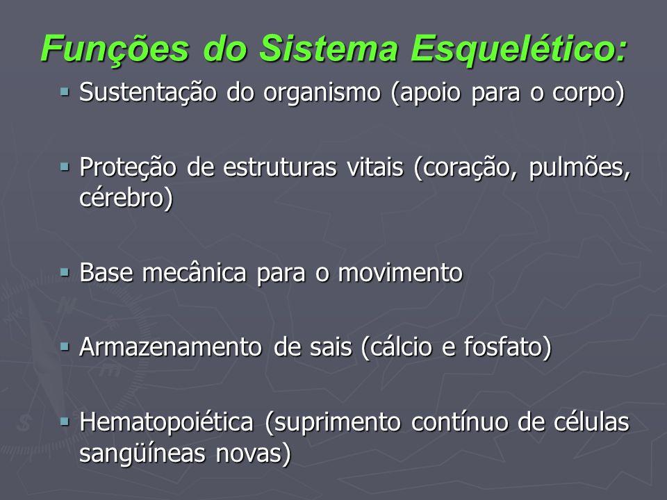Funções do Sistema Esquelético: Sustentação do organismo (apoio para o corpo) Sustentação do organismo (apoio para o corpo) Proteção de estruturas vit