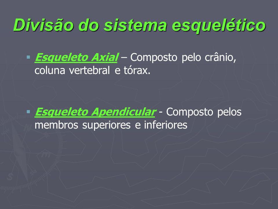 Divisão do sistema esquelético Esqueleto Axial – Composto pelo crânio, coluna vertebral e tórax. Esqueleto Apendicular - Composto pelos membros superi