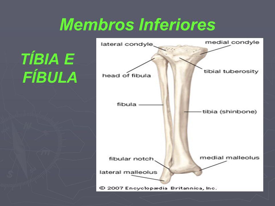 Membros Inferiores TÍBIA E FÍBULA
