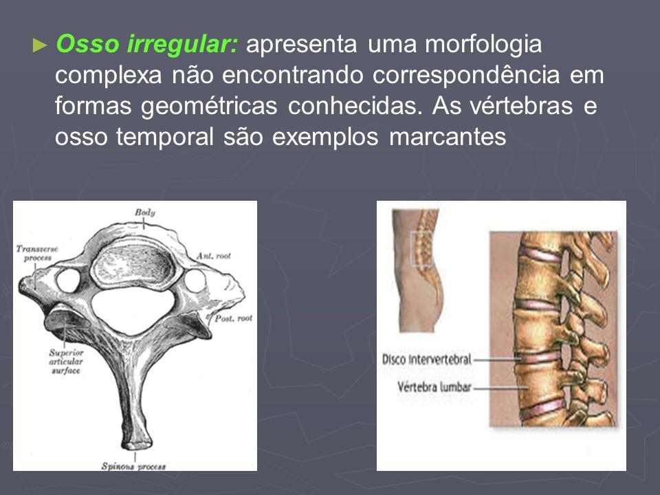 Osso irregular: apresenta uma morfologia complexa não encontrando correspondência em formas geométricas conhecidas. As vértebras e osso temporal são e