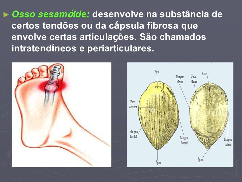 Osso sesam ó ide: desenvolve na substância de certos tendões ou da c á psula fibrosa que envolve certas articula ç ões. São chamados intratend í neos