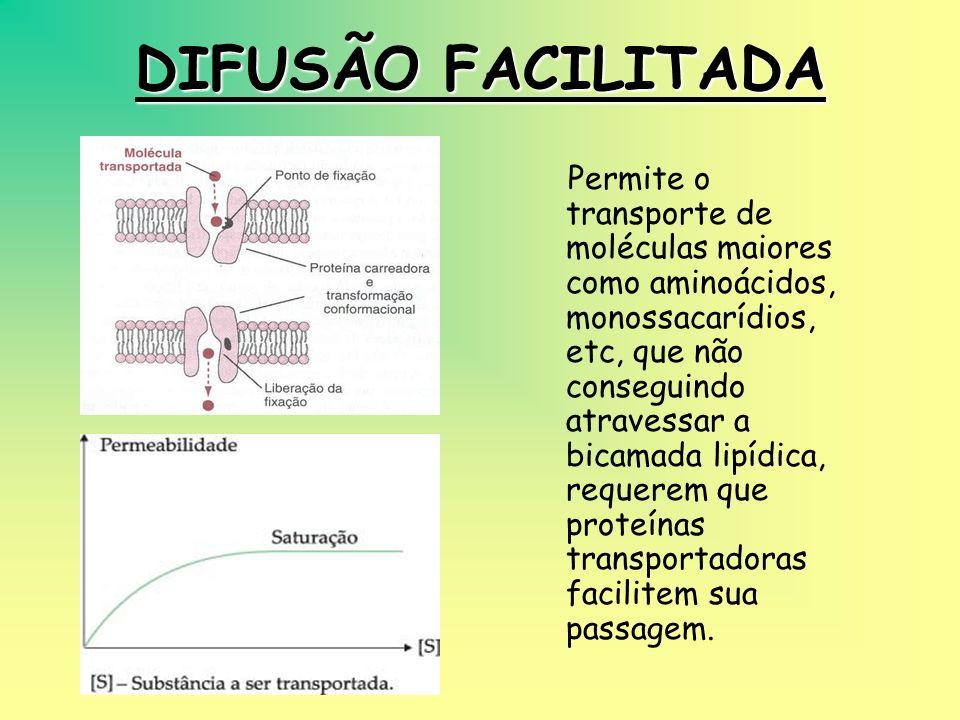 DIFUSÃO SIMPLES Ocorre do local de maior concentração para o de menor concentração, a favor de um gradiente de concentração. Ex: difusão do oxigênio d