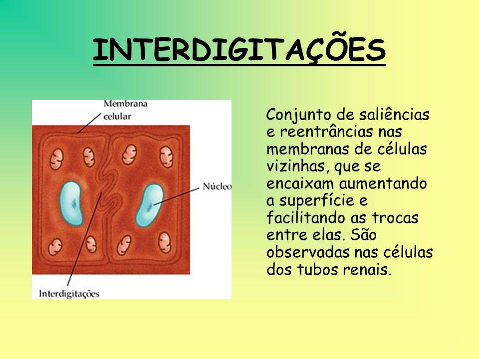 MICROVILOSIDADES Expansões semelhantes a dedos de luvas, que aumentam a superfície de absorção. Existem na mucosa intestinal e nos túbulos renais.