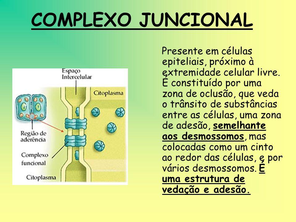 DESMOSSOMOS São placas arredondadas formadas pelas membranas de células vizinhas. O espaço entre as membranas é ocupado por um material mais eletroden