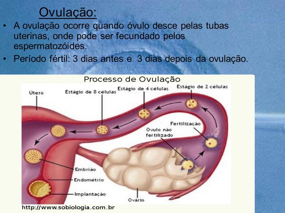 Ovulação: A ovulação ocorre quando óvulo desce pelas tubas uterinas, onde pode ser fecundado pelos espermatozóides. Período fértil: 3 dias antes e 3 d