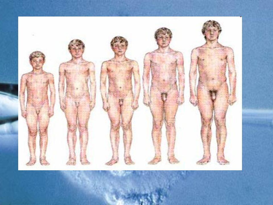 O hormônio sexual responsável por essas mudanças é o ESTRÓGENO.