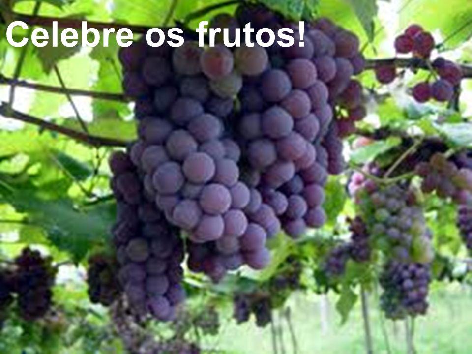 Celebre os frutos!