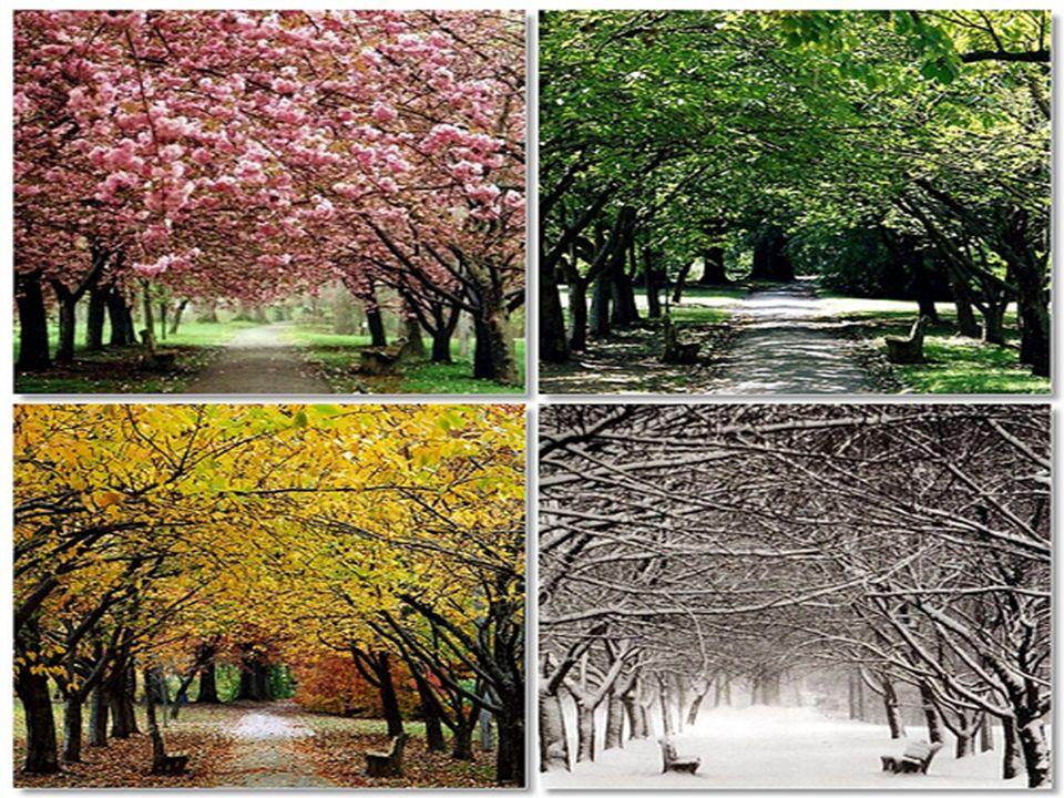 As estações do ano são distintas em suas características, porém importantes nas suas peculiaridades.