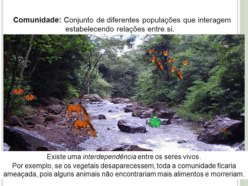 Comunidade: Conjunto de diferentes populações que interagem estabelecendo relações entre si. Existe uma interdependência entre os seres vivos. Por exe