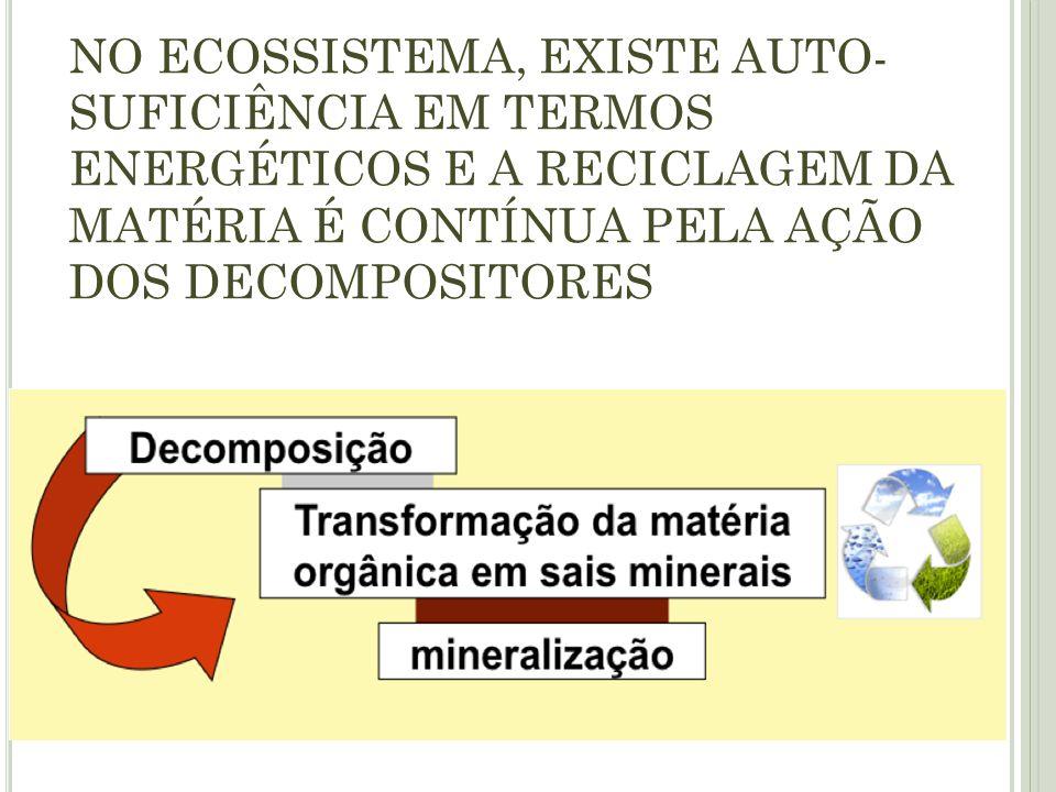 NO ECOSSISTEMA, EXISTE AUTO- SUFICIÊNCIA EM TERMOS ENERGÉTICOS E A RECICLAGEM DA MATÉRIA É CONTÍNUA PELA AÇÃO DOS DECOMPOSITORES