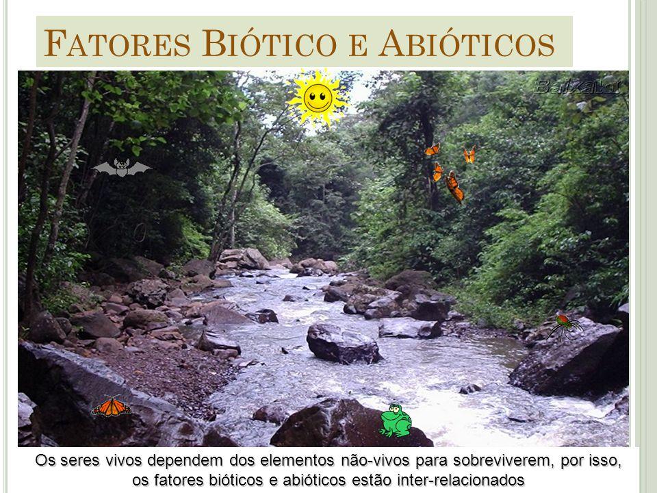 Os seres vivos dependem dos elementos não-vivos para sobreviverem, por isso, os fatores bióticos e abióticos estão inter-relacionados F ATORES B IÓTIC