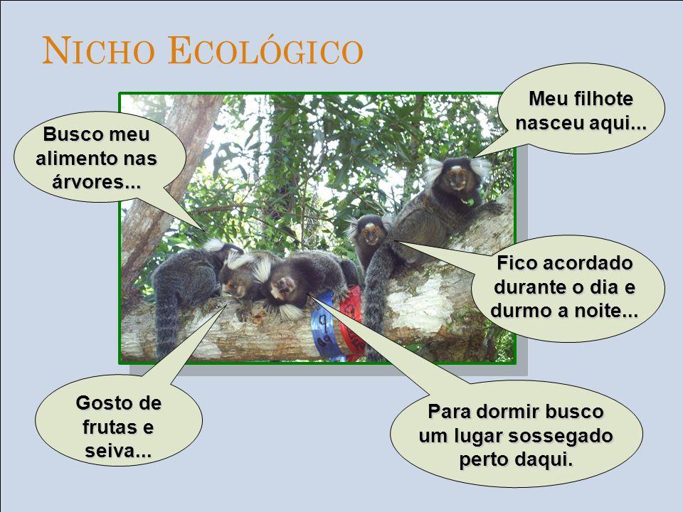 Conjunto de todos os ecossistemas, ou seja, todas as regiões da terra onde há vida Está um frio!!!