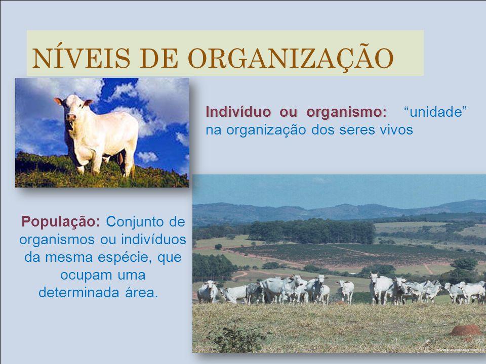 Indivíduo ou organismo: Indivíduo ou organismo: unidade na organização dos seres vivos População: Conjunto de organismos ou indivíduos da mesma espéci