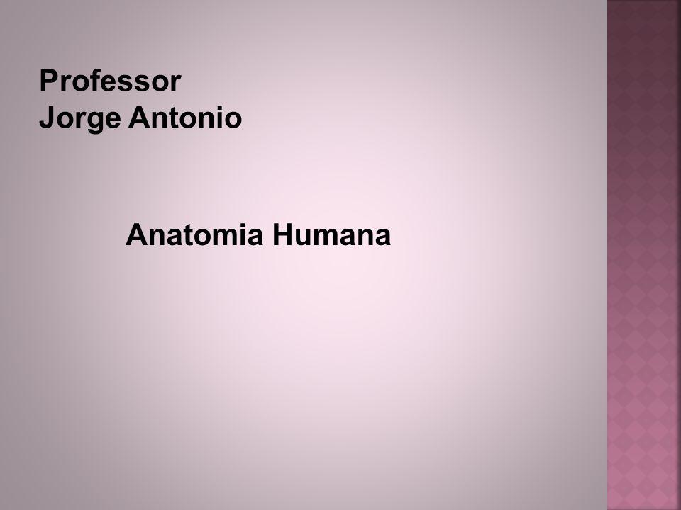 Posição Anatômica Para evitar o uso de termos diferentes nas descrições anatômica, optou-se por uma posição padrão, denominada posição de descrição anatômica.