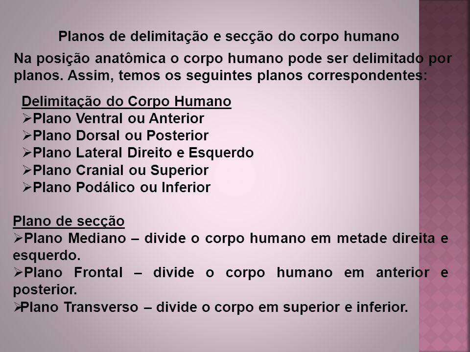 Planos de delimitação e secção do corpo humano Na posição anatômica o corpo humano pode ser delimitado por planos. Assim, temos os seguintes planos co
