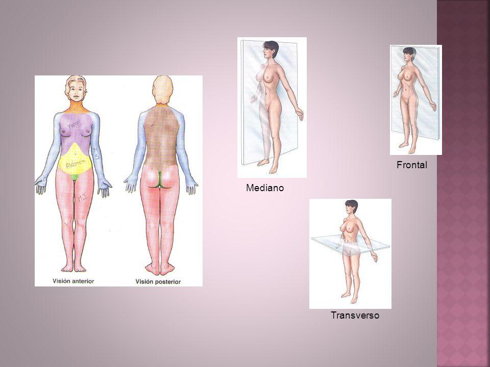 Mediano Frontal Transverso