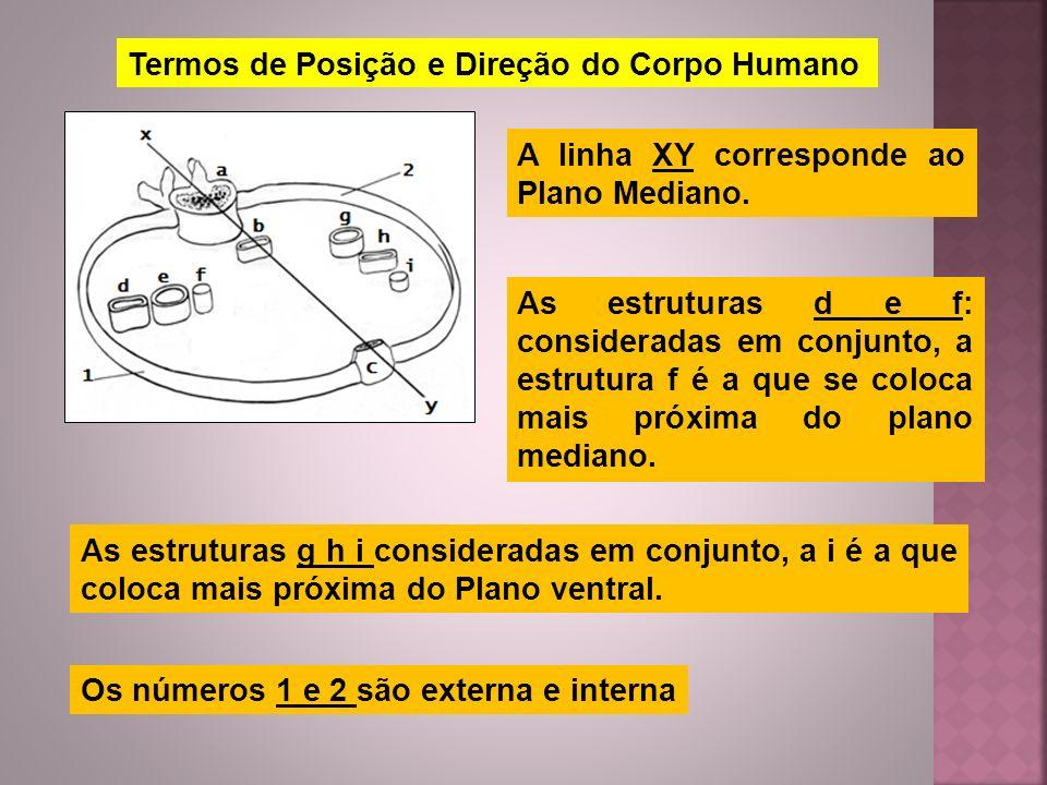 Termos de Posição e Direção do Corpo Humano A linha XY corresponde ao Plano Mediano. As estruturas d e f: consideradas em conjunto, a estrutura f é a