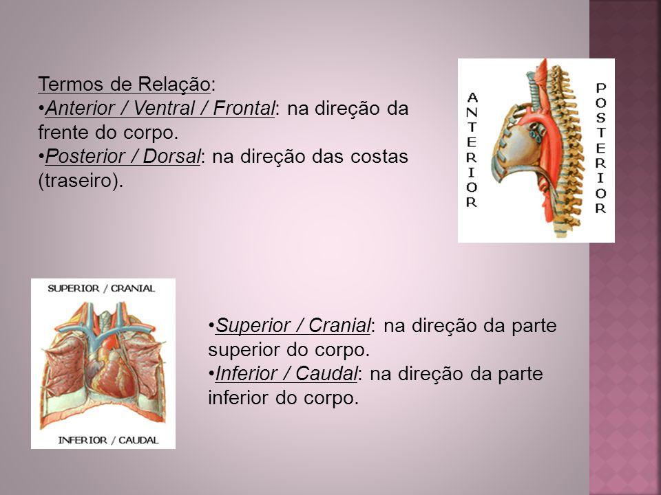 Termos de Relação: Anterior / Ventral / Frontal: na direção da frente do corpo. Posterior / Dorsal: na direção das costas (traseiro). Superior / Crani