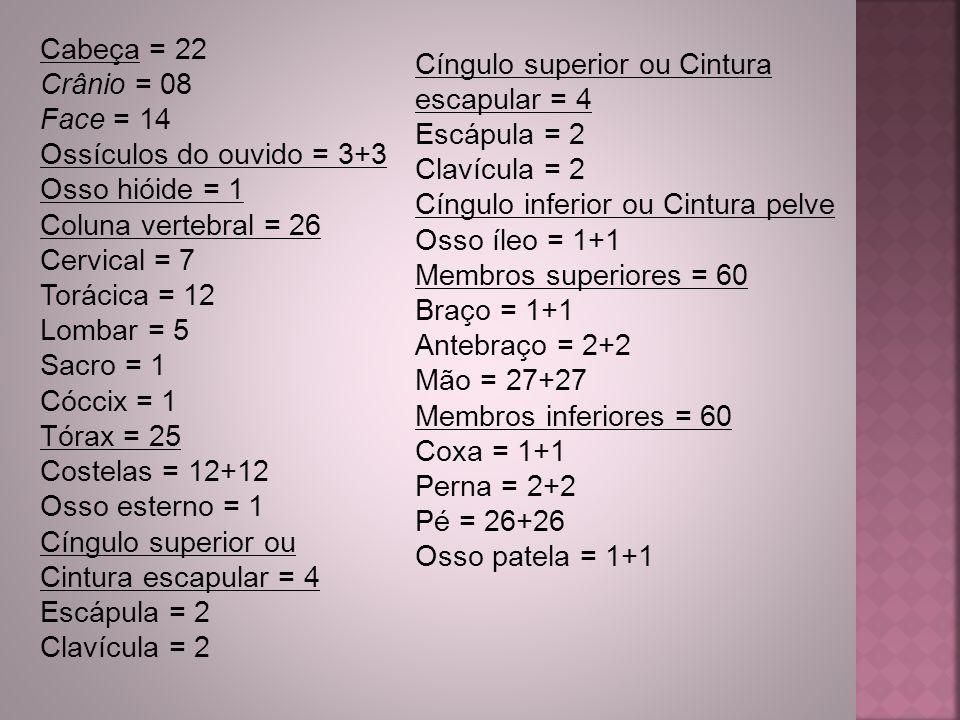 Cabeça = 22 Crânio = 08 Face = 14 Ossículos do ouvido = 3+3 Osso hióide = 1 Coluna vertebral = 26 Cervical = 7 Torácica = 12 Lombar = 5 Sacro = 1 Cócc