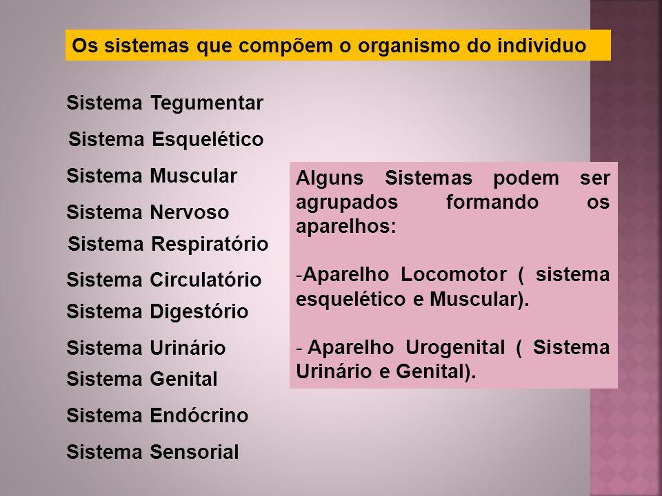 Os sistemas que compõem o organismo do individuo Sistema Tegumentar Sistema Esquelético Sistema Muscular Sistema Nervoso Sistema Circulatório Sistema