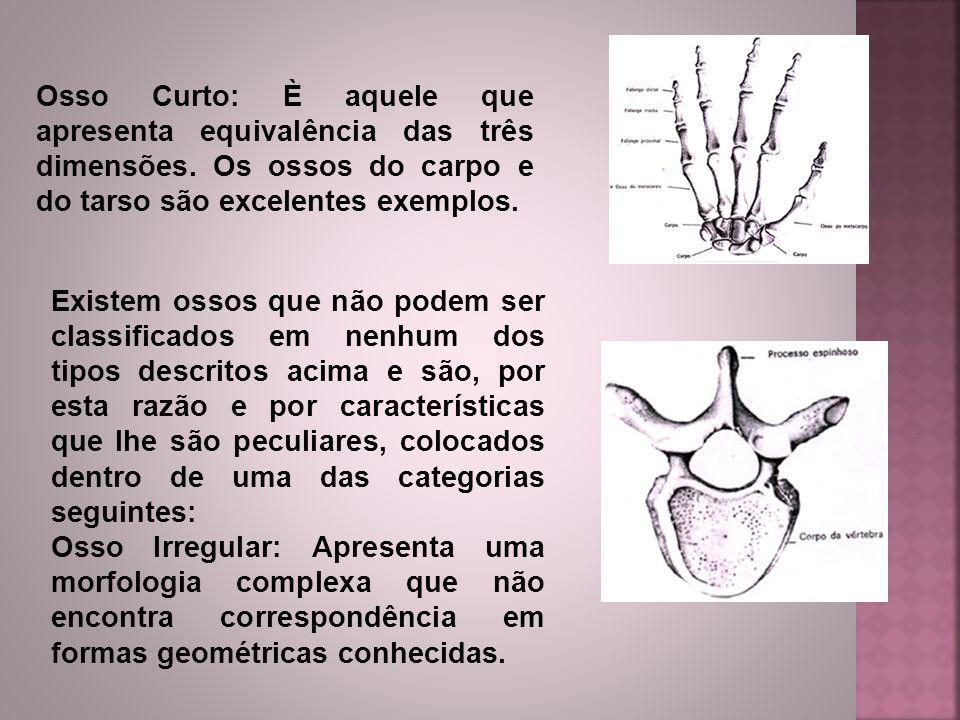 Osso Curto: È aquele que apresenta equivalência das três dimensões. Os ossos do carpo e do tarso são excelentes exemplos. Existem ossos que não podem