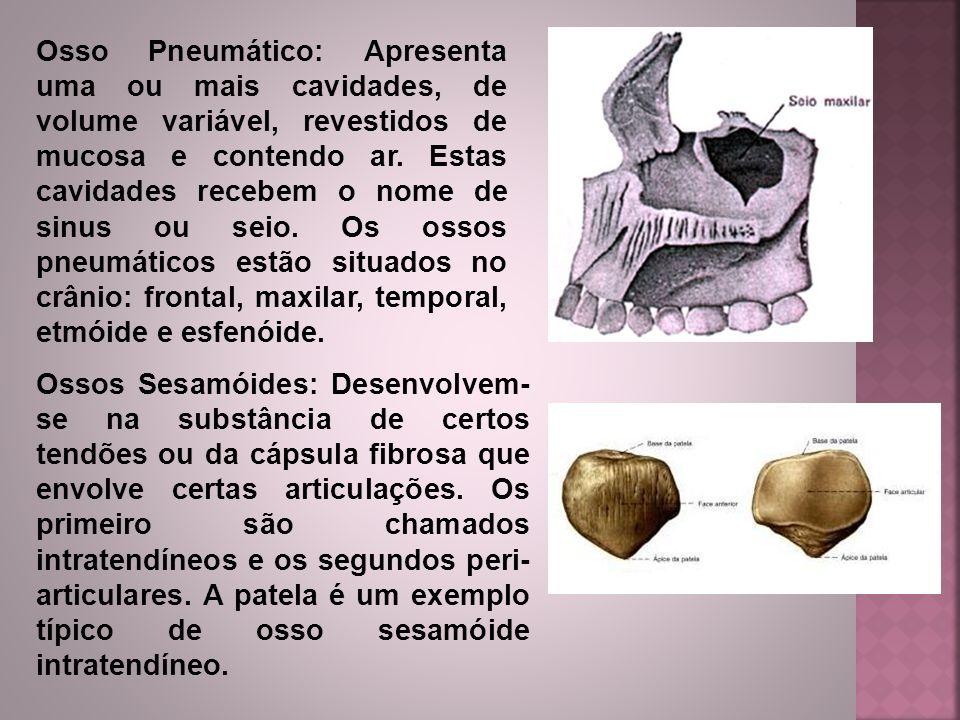 Osso Pneumático: Apresenta uma ou mais cavidades, de volume variável, revestidos de mucosa e contendo ar. Estas cavidades recebem o nome de sinus ou s