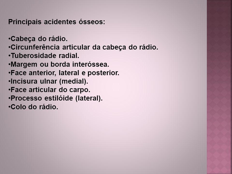 Principais acidentes ósseos: Cabeça do rádio. Circunferência articular da cabeça do rádio. Tuberosidade radial. Margem ou borda interóssea. Face anter