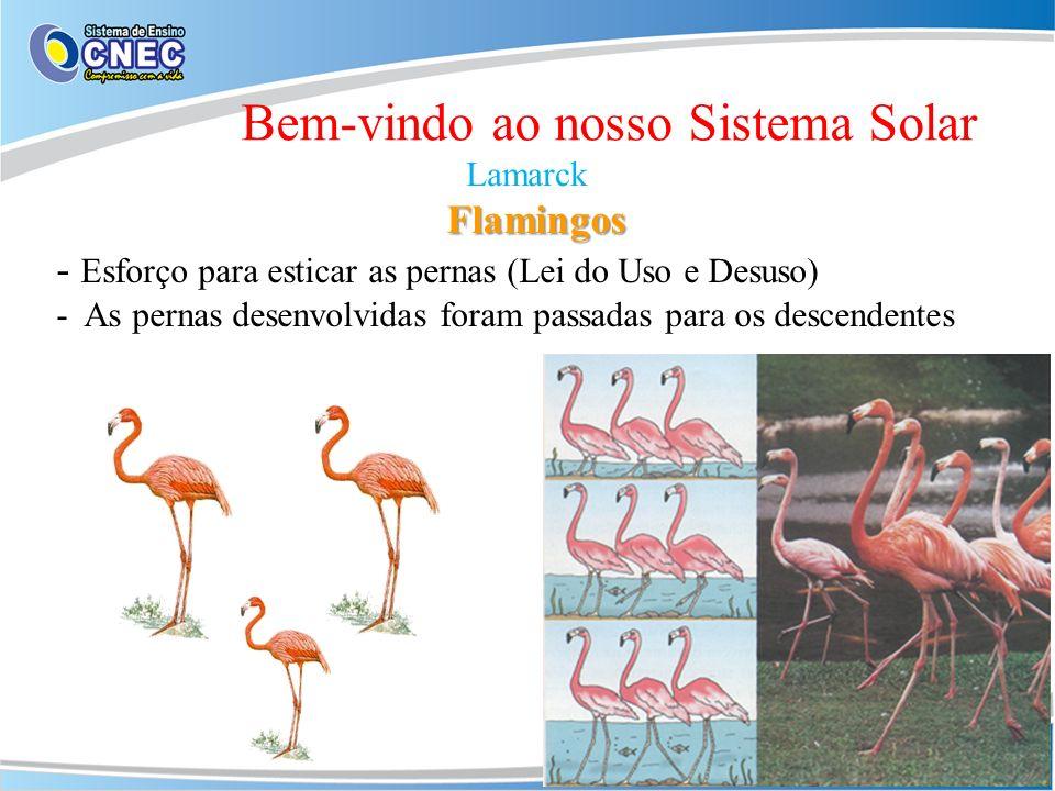 Bem-vindo ao nosso Sistema Solar Lamarck Flamingos - Esforço para esticar as pernas (Lei do Uso e Desuso) - As pernas desenvolvidas foram passadas par
