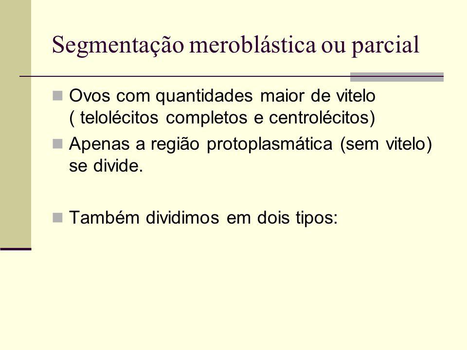 Segmentação meroblástica ou parcial Ovos com quantidades maior de vitelo ( telolécitos completos e centrolécitos) Apenas a região protoplasmática (sem