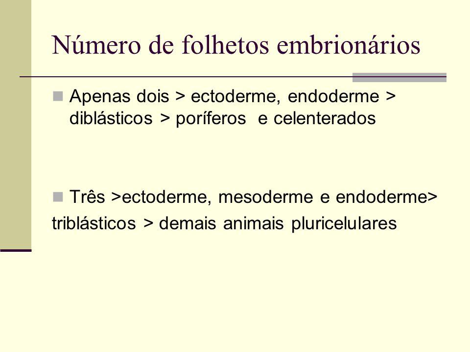 Número de folhetos embrionários Apenas dois > ectoderme, endoderme > diblásticos > poríferos e celenterados Três >ectoderme, mesoderme e endoderme> tr