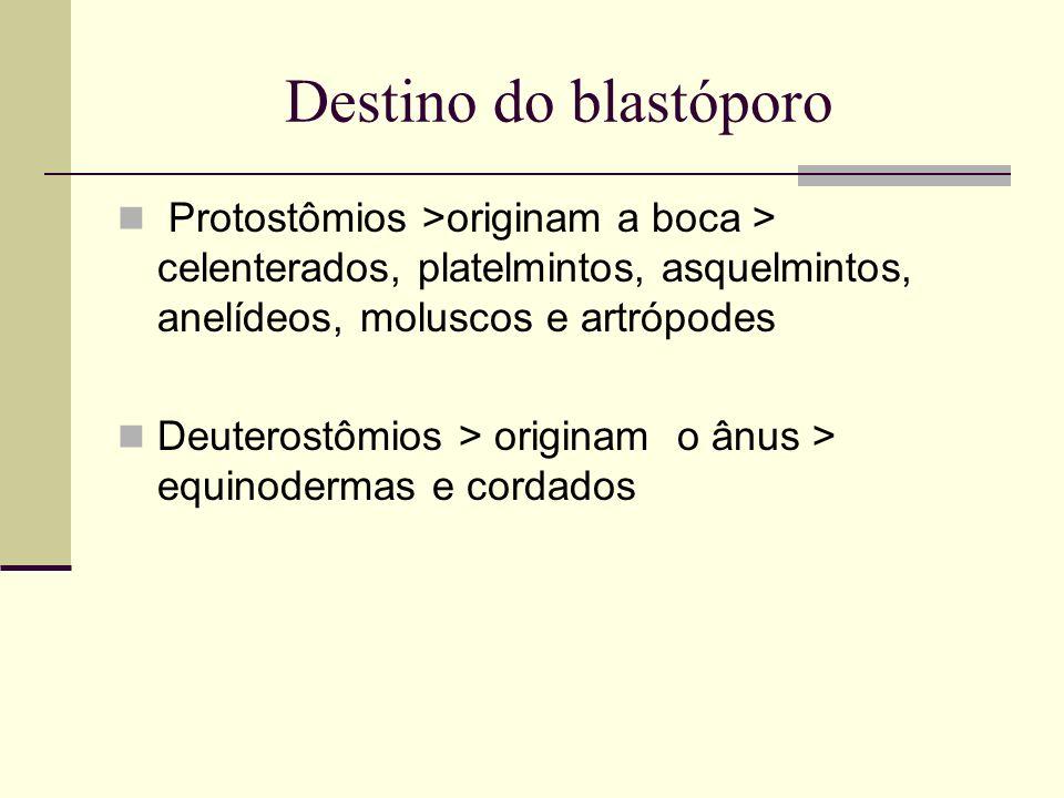 Destino do blastóporo Protostômios >originam a boca > celenterados, platelmintos, asquelmintos, anelídeos, moluscos e artrópodes Deuterostômios > orig