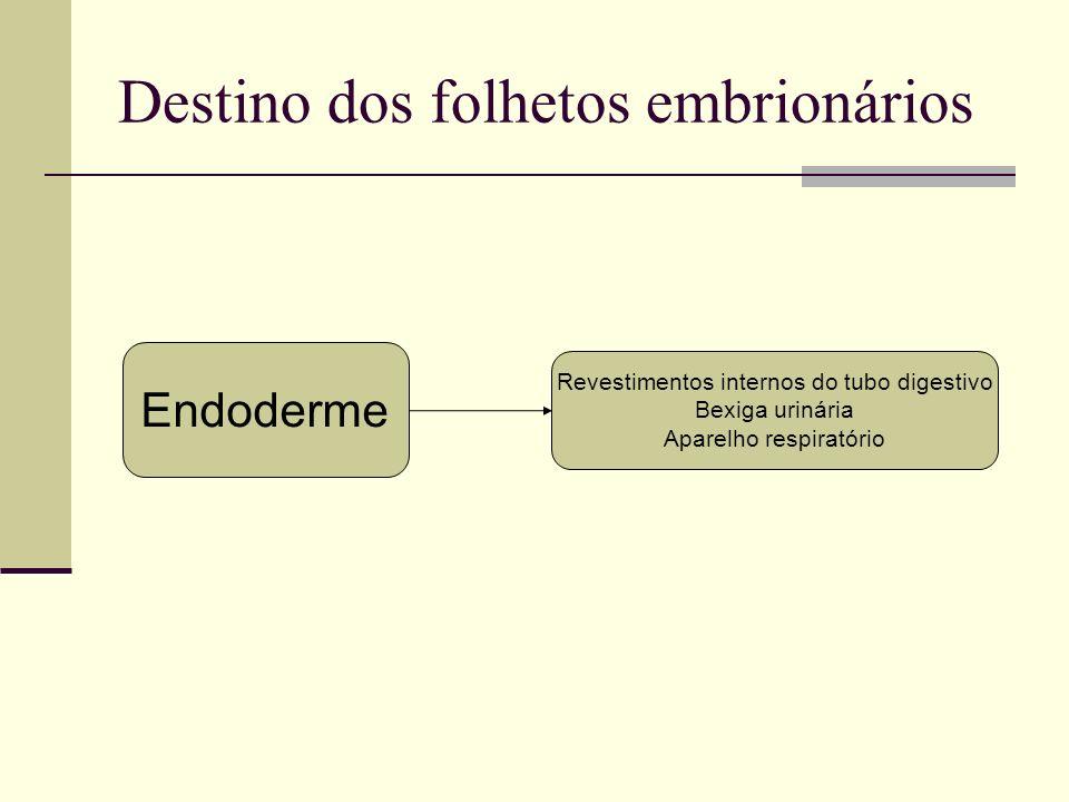 Destino dos folhetos embrionários Endoderme Revestimentos internos do tubo digestivo Bexiga urinária Aparelho respiratório