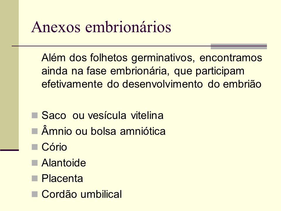 Anexos embrionários Além dos folhetos germinativos, encontramos ainda na fase embrionária, que participam efetivamente do desenvolvimento do embrião S