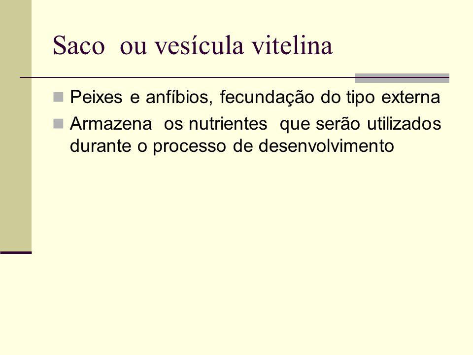 Saco ou vesícula vitelina Peixes e anfíbios, fecundação do tipo externa Armazena os nutrientes que serão utilizados durante o processo de desenvolvime